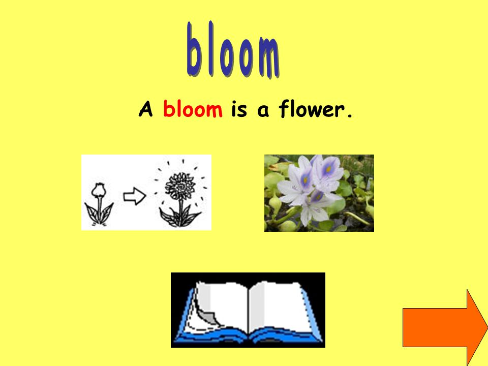A bloom is a flower.