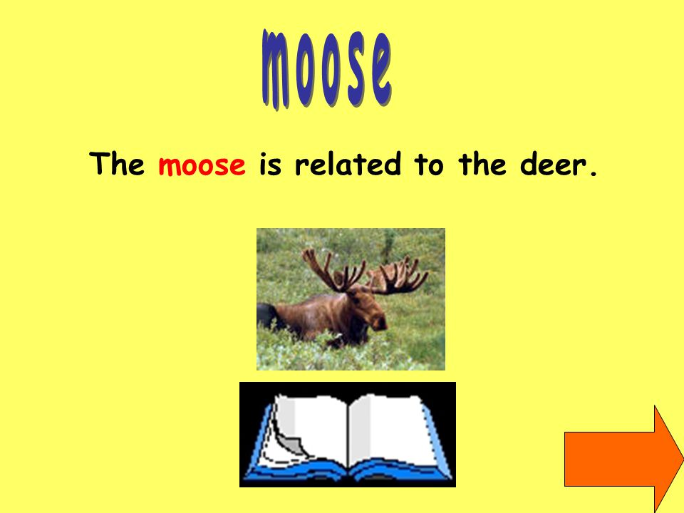 The moose is related to the deer.