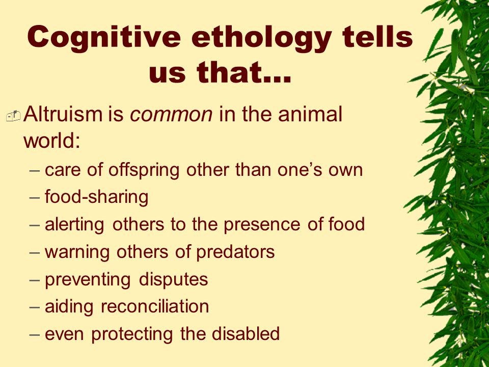 Cognitive ethology tells us that…  Altruism is common in the animal world: –care of offspring other than one's own –food-sharing –alerting others to the presence of food –warning others of predators –preventing disputes –aiding reconciliation –even protecting the disabled