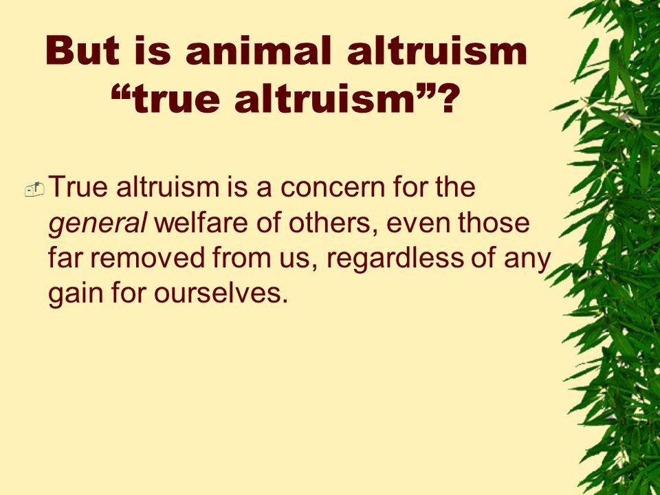 But is animal altruism true altruism .