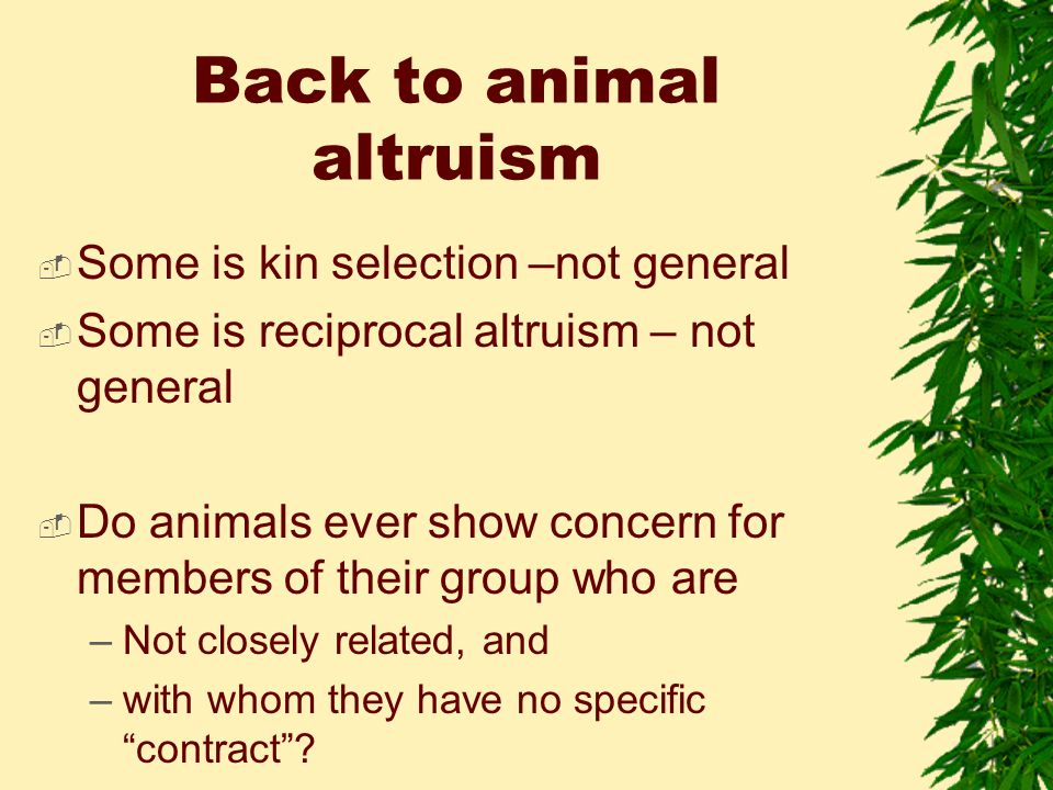 Back to animal altruism  Some is kin selection –not general  Some is reciprocal altruism – not general  Do animals ever show concern for members of their group who are –Not closely related, and –with whom they have no specific contract ?