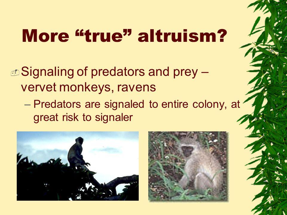 More true altruism.
