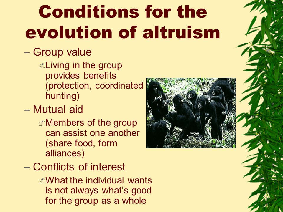 Conditions for the evolution of altruism –Group value  Living in the group provides benefits (protection, coordinated hunting) –Mutual aid  Members of the group can assist one another (share food, form alliances) –Conflicts of interest  What the individual wants is not always what's good for the group as a whole