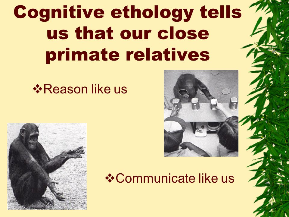 Cognitive ethology tells us that our close primate relatives  Reason like us  Communicate like us