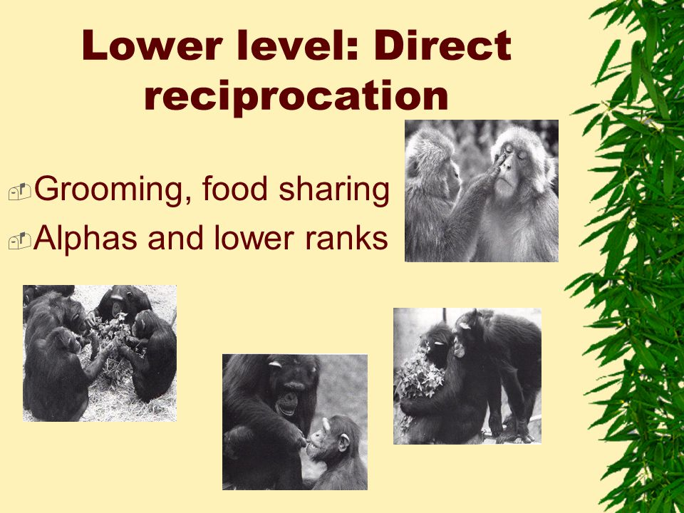 Lower level: Direct reciprocation  Grooming, food sharing  Alphas and lower ranks