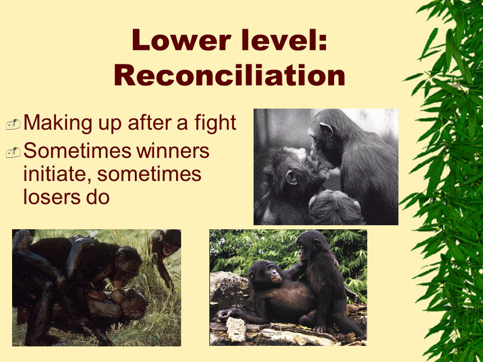 Lower level: Reconciliation  Making up after a fight  Sometimes winners initiate, sometimes losers do