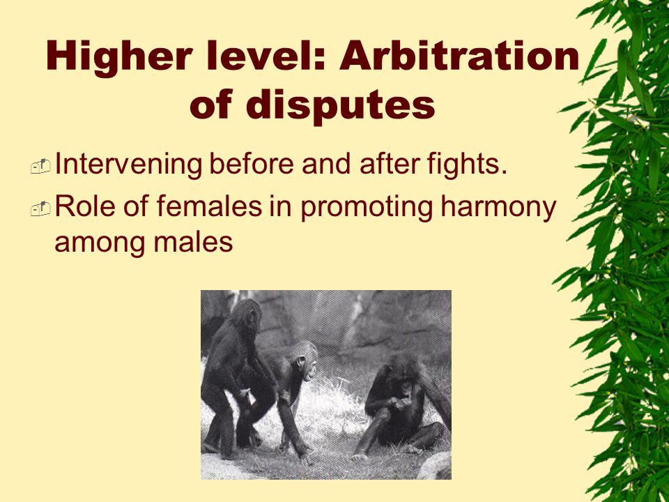 Higher level: Arbitration of disputes  Intervening before and after fights.