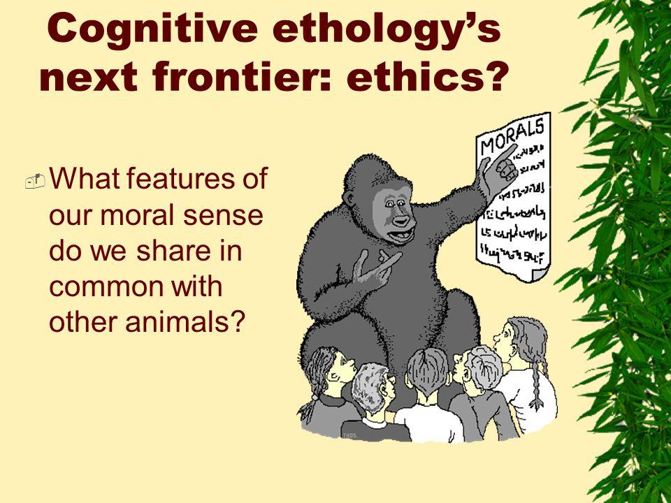 Cognitive ethology's next frontier: ethics.
