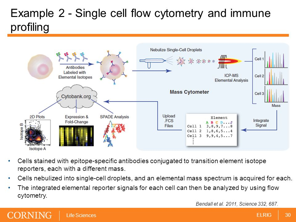 30ELRIG Life Sciences Example 2 - Single cell flow cytometry and immune profiling Cells stained with epitope-specific antibodies conjugated to transit
