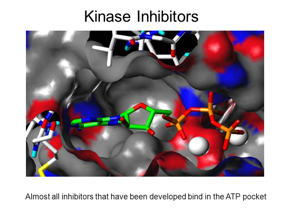 Kinase Inhibitors Almost all inhibitors that have been developed bind in the ATP pocket