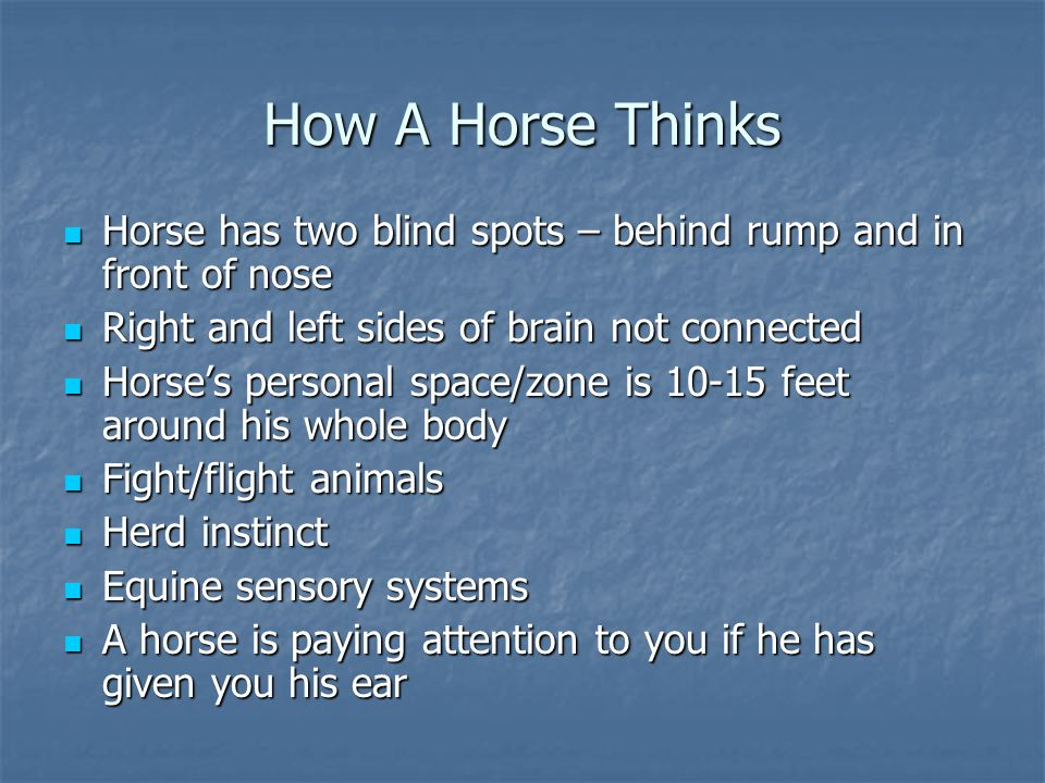 How A Horse Thinks Horse has two blind spots – behind rump and in front of nose Horse has two blind spots – behind rump and in front of nose Right and
