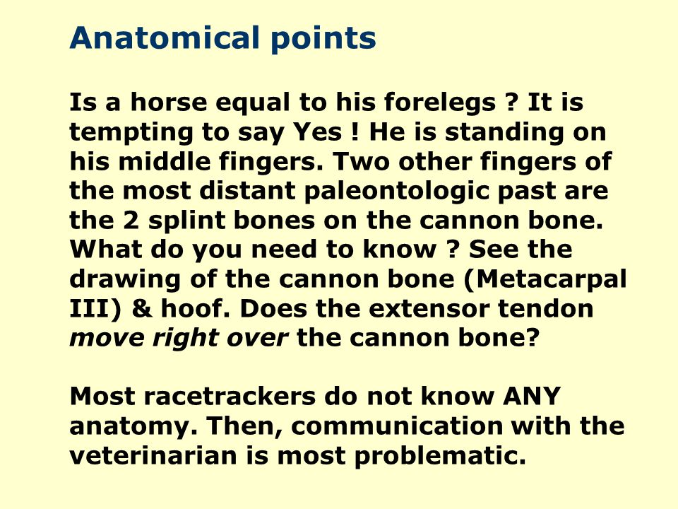 Anatomical points Is a horse equal to his forelegs ? It is tempting to say Yes ! He is standing on his middle fingers. Two other fingers of the most d