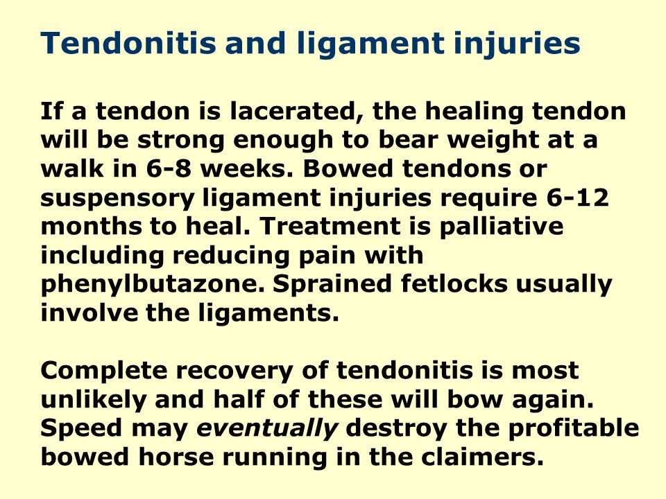 Tendonitis and ligament injuries If a tendon is lacerated, the healing tendon will be strong enough to bear weight at a walk in 6-8 weeks. Bowed tendo