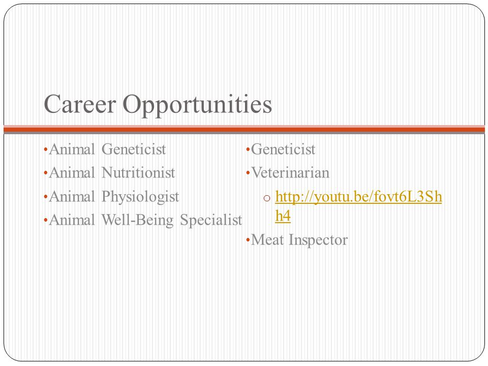 Career Opportunities Animal Geneticist Animal Nutritionist Animal Physiologist Animal Well-Being Specialist Geneticist Veterinarian o http://youtu.be/fovt6L3Sh h4 http://youtu.be/fovt6L3Sh h4 Meat Inspector