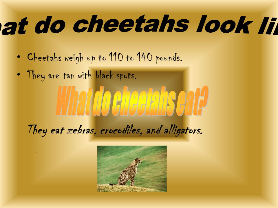 Cheetahs weigh up to 110 to 140 pounds. They are tan with black spots.