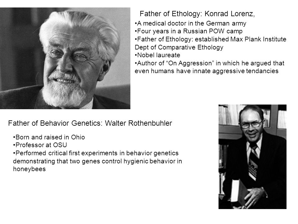 Father of Ethology: Konrad Lorenz, A medical doctor in the German army Four years in a Russian POW camp Father of Ethology: established Max Plank Institute Dept of Comparative Ethology Nobel laureate Author of On Aggression in which he argued that even humans have innate aggressive tendancies Born and raised in Ohio Professor at OSU Performed critical first experiments in behavior genetics demonstrating that two genes control hygienic behavior in honeybees Father of Behavior Genetics: Walter Rothenbuhler