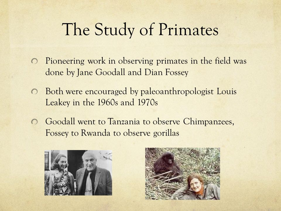 The Study of Primates Pioneering work in observing primates in the field was done by Jane Goodall and Dian Fossey Both were encouraged by paleoanthrop