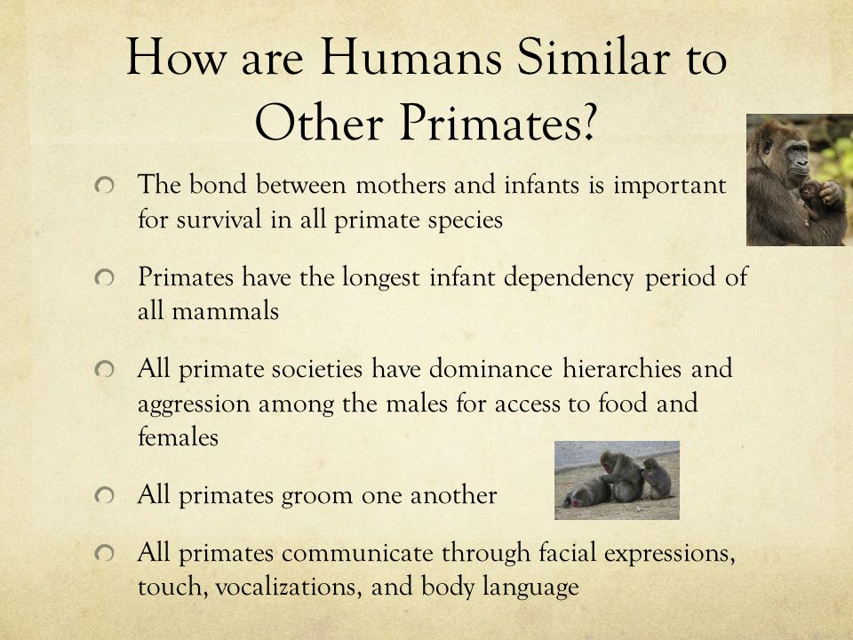 How are Humans Similar to Other Primates.