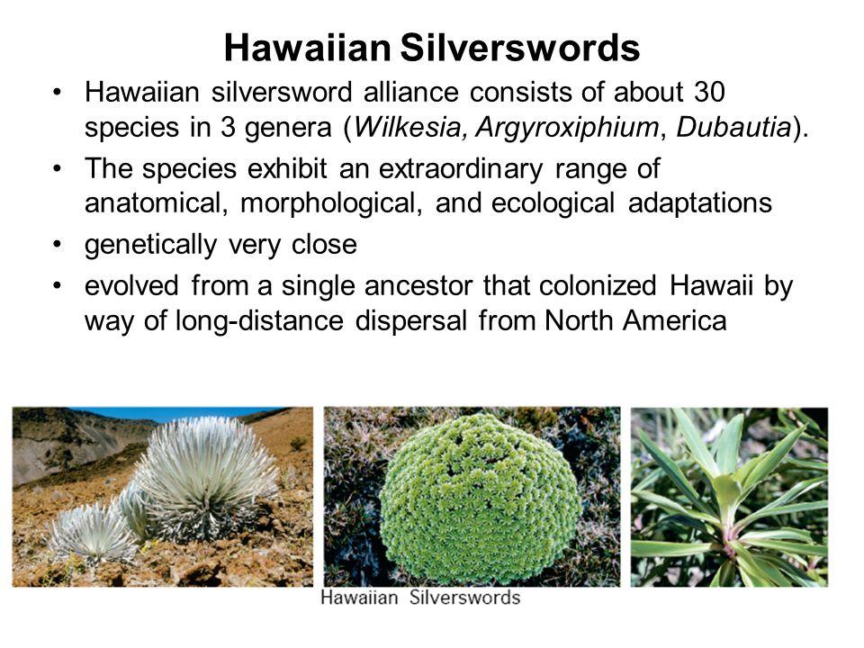 Hawaiian Silverswords Hawaiian silversword alliance consists of about 30 species in 3 genera (Wilkesia, Argyroxiphium, Dubautia). The species exhibit