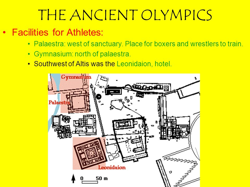 THE ANCIENT OLYMPICS Facilities for Athletes: Palaestra: west of sanctuary. Place for boxers and wrestlers to train. Gymnasium: north of palaestra. So
