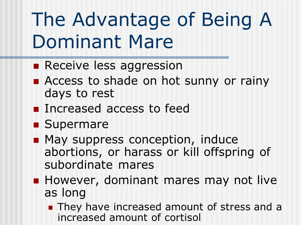The Advantage of Being A Dominant Mare Receive less aggression Access to shade on hot sunny or rainy days to rest Increased access to feed Supermare May suppress conception, induce abortions, or harass or kill offspring of subordinate mares However, dominant mares may not live as long They have increased amount of stress and a increased amount of cortisol