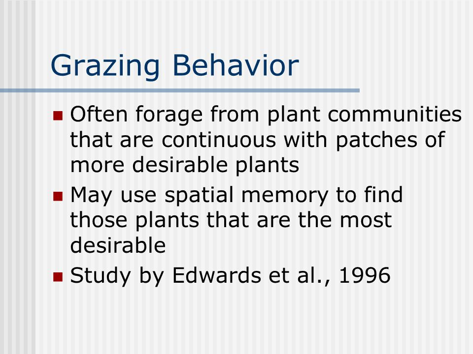 Grazing Behavior Often forage from plant communities that are continuous with patches of more desirable plants May use spatial memory to find those plants that are the most desirable Study by Edwards et al., 1996