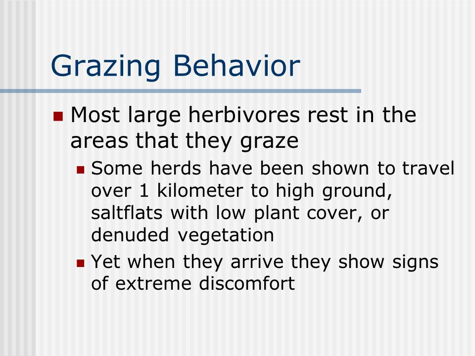 Grazing Behavior Most large herbivores rest in the areas that they graze Some herds have been shown to travel over 1 kilometer to high ground, saltflats with low plant cover, or denuded vegetation Yet when they arrive they show signs of extreme discomfort