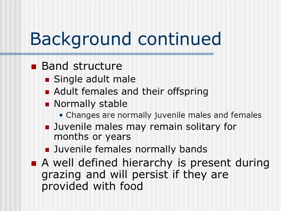 Background continued Band structure Single adult male Adult females and their offspring Normally stable Changes are normally juvenile males and females Juvenile males may remain solitary for months or years Juvenile females normally bands A well defined hierarchy is present during grazing and will persist if they are provided with food
