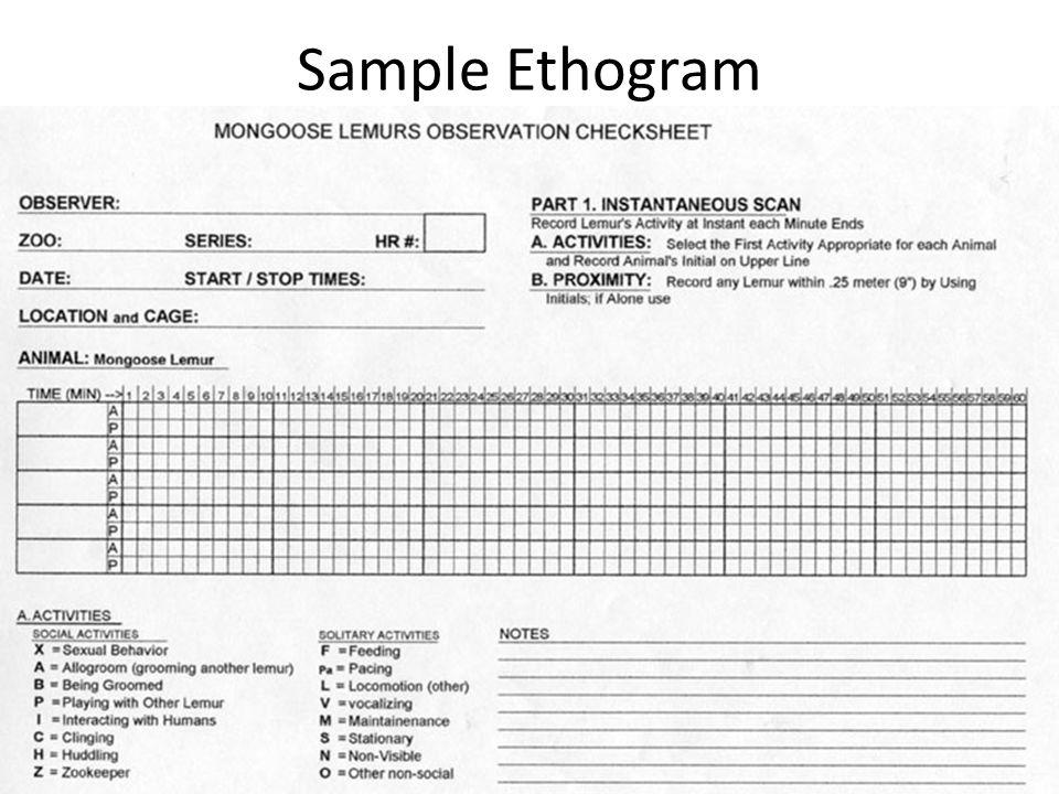 Sample Ethogram