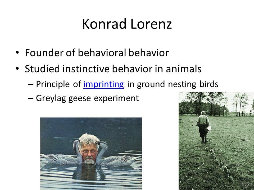 Konrad Lorenz Founder of behavioral behavior Studied instinctive behavior in animals – Principle of imprinting in ground nesting birdsimprinting – Greylag geese experiment