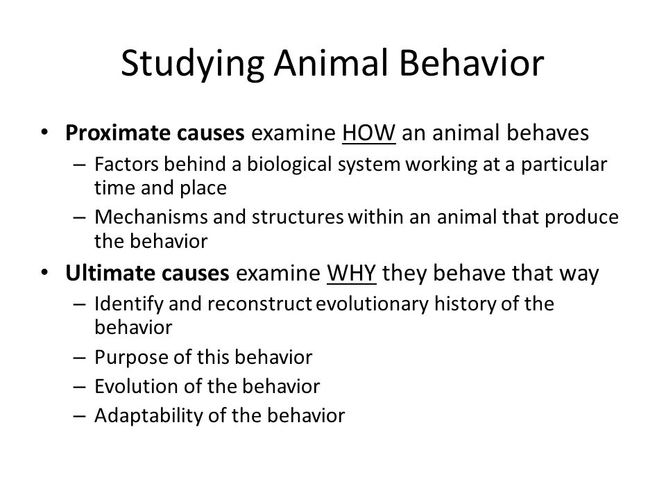 Studying Animal Behavior Proximate causes examine HOW an animal behaves – Factors behind a biological system working at a particular time and place – Mechanisms and structures within an animal that produce the behavior Ultimate causes examine WHY they behave that way – Identify and reconstruct evolutionary history of the behavior – Purpose of this behavior – Evolution of the behavior – Adaptability of the behavior
