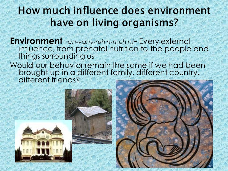 How much influence does environment have on living organisms? Environment - en-vahy-ruh n-muh nt - Every external influence, from prenatal nutrition t