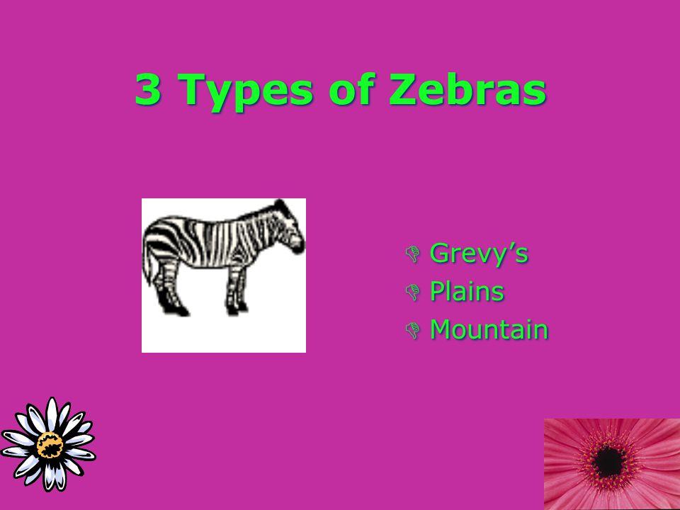 3 Types of Zebras DGrevy's DPlains DMountain DGrevy's DPlains DMountain