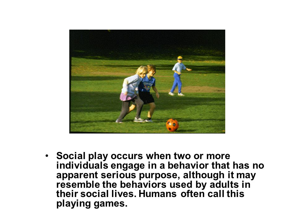 Social play occurs when two or more individuals engage in a behavior that has no apparent serious purpose, although it may resemble the behaviors used