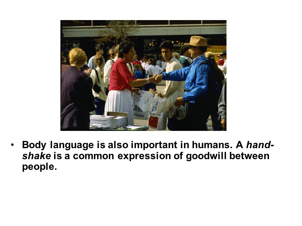 Body language is also important in humans. A hand- shake is a common expression of goodwill between people.