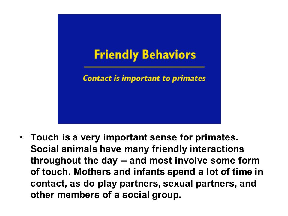 Touch is a very important sense for primates. Social animals have many friendly interactions throughout the day -- and most involve some form of touch