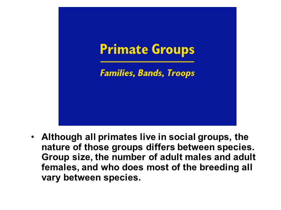 Although all primates live in social groups, the nature of those groups differs between species. Group size, the number of adult males and adult femal