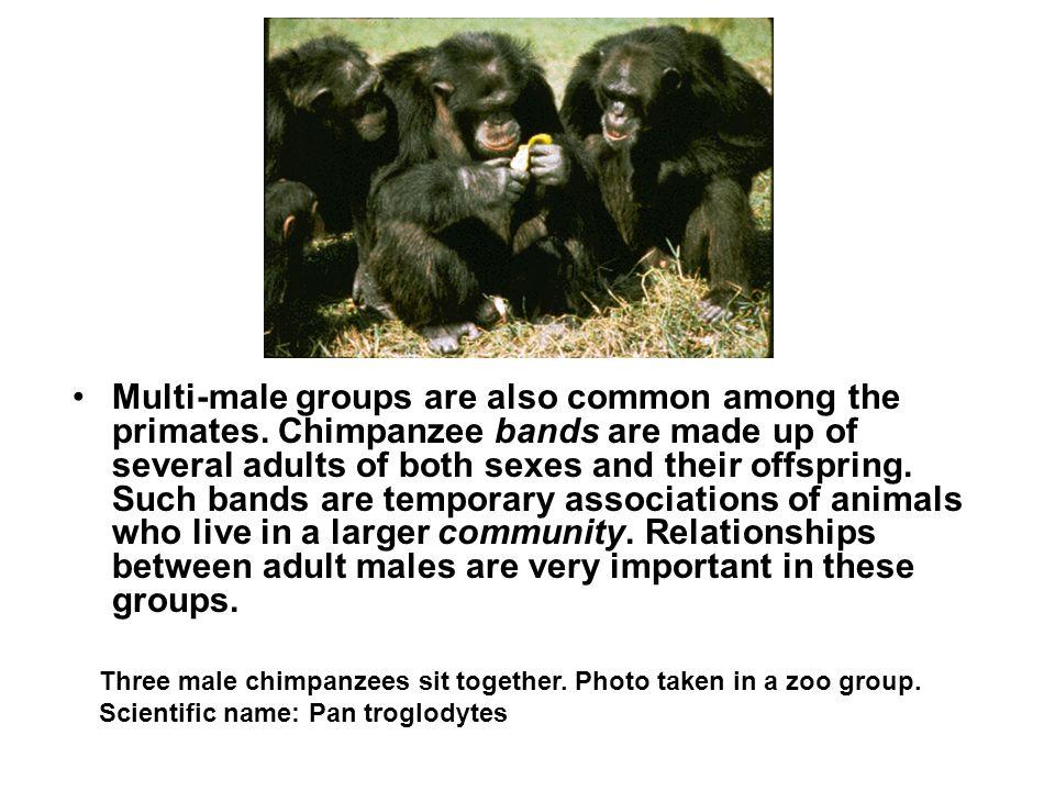 Primate body language can be very impressive.