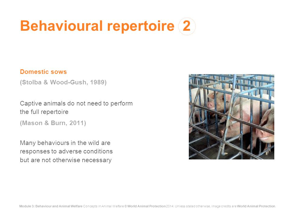 Module 3: Behaviour and Animal Welfare Concepts in Animal Welfare © World Animal Protection 2014. Unless stated otherwise, image credits are World Ani