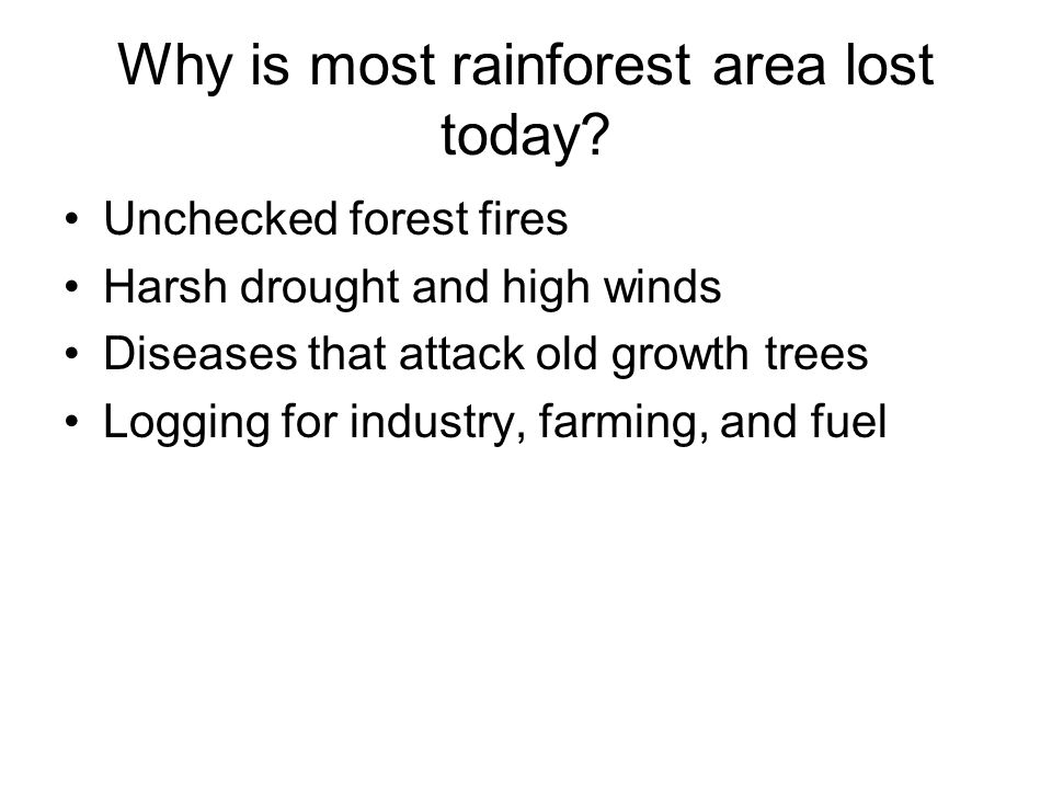 Why is most rainforest area lost today? Unchecked forest fires Harsh drought and high winds Diseases that attack old growth trees Logging for industry
