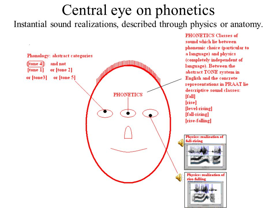 22 Central eye on phonology phonetic realizations