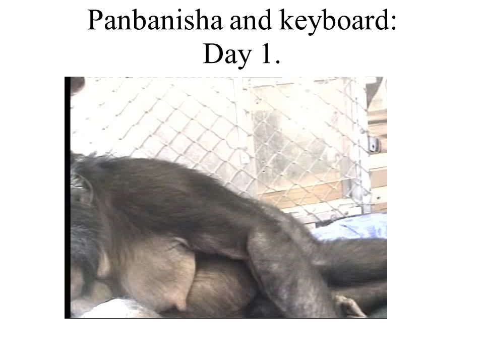 1) Ideational: An ape and a piano Peter Gabriel brought three members of his band to interact with the bonobo apes (99.6% of our genes) Kanzi and Panbanisha and their caregiver Dr.