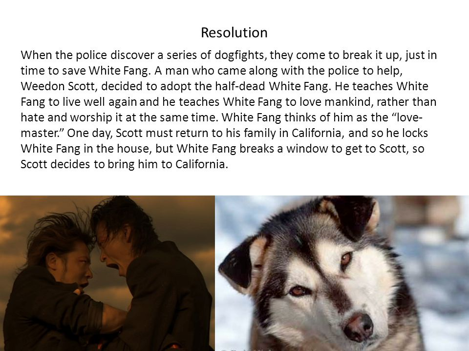 Resolution When the police discover a series of dogfights, they come to break it up, just in time to save White Fang. A man who came along with the po