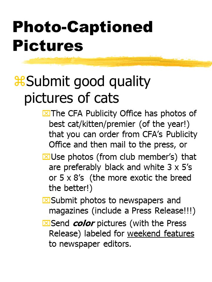 Photo-Captioned Pictures zSubmit good quality pictures of cats xThe CFA Publicity Office has photos of best cat/kitten/premier (of the year!) that you can order from CFA's Publicity Office and then mail to the press, or xUse photos (from club member's) that are preferably black and white 3 x 5's or 5 x 8's (the more exotic the breed the better!) xSubmit photos to newspapers and magazines (include a Press Release!!!) xSend color pictures (with the Press Release) labeled for weekend features to newspaper editors.