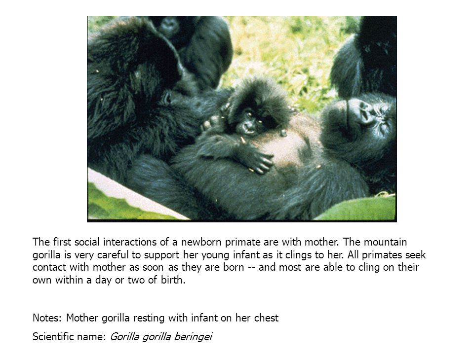 Multi-male groups are also common among the primates.