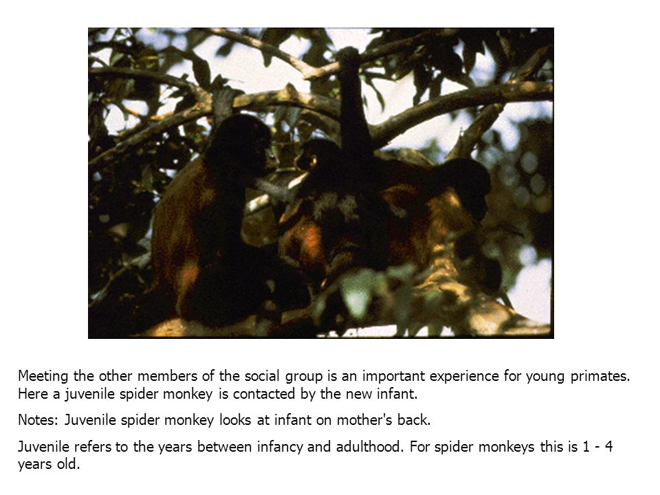 Meeting the other members of the social group is an important experience for young primates.
