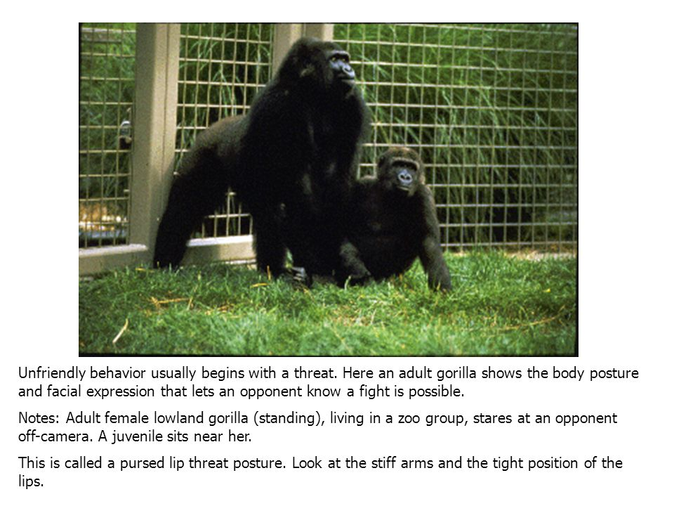 Social animals don't always get along with the members of their group. Fights and other forms of aggression are a common occurrence in primate groups.