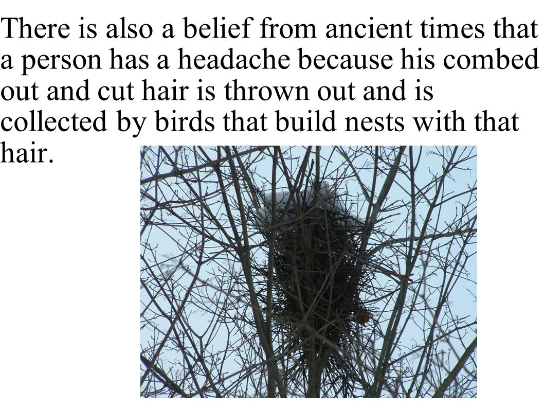 There is also a belief from ancient times that a person has a headache because his combed out and cut hair is thrown out and is collected by birds that build nests with that hair.