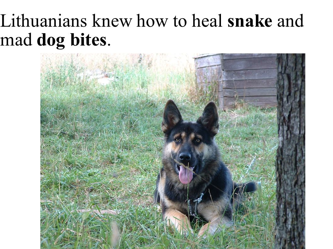 Lithuanians knew how to heal snake and mad dog bites.