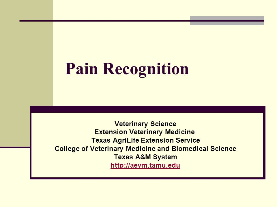 Objectives Define pain Discuss classifications of physiological pain Describe behavioral signs that indicate pain Describe the physiological response to pain Discuss non-chemical procedures to assist a patient in possible pain